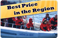 Whalewatching cruise in zodiac at the best price